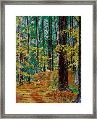 Trail At Wason Pond Framed Print by Sean Connolly
