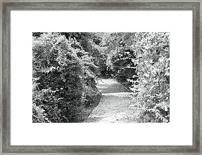 Trail In Black And White Framed Print by Carolyn Ricks