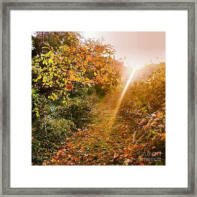 Fall Trail Framed Print