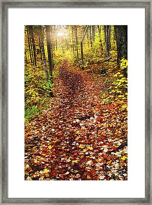 Trail In Fall Forest Framed Print by Elena Elisseeva