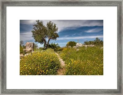 Framed Print featuring the photograph Trail Of Spring by Uri Baruch