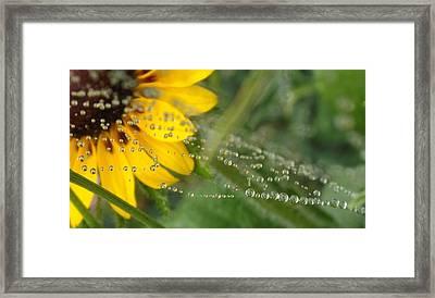 Trail Of Tears Framed Print by Elizabeth Sullivan