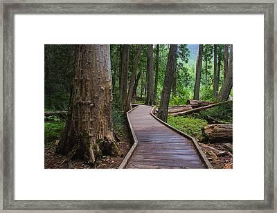 Trail Of The Cedars Framed Print