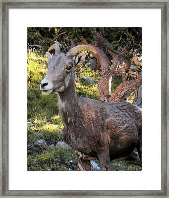 Trail-side Visitor Framed Print