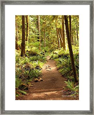 Trail Through The Rainforest Framed Print
