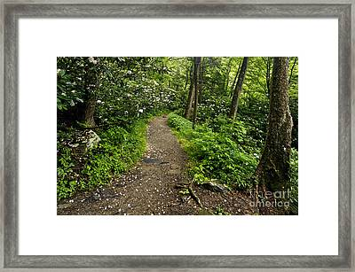 Trail To Chimney Tops - D005669a Framed Print