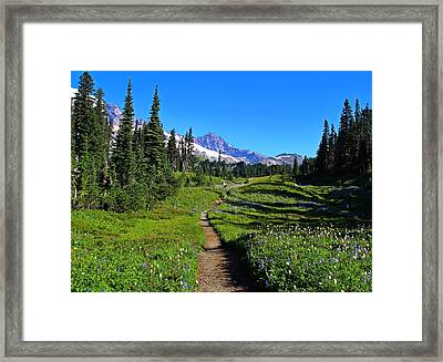 Trail To Mazama Ridge Framed Print by Lynn Hopwood
