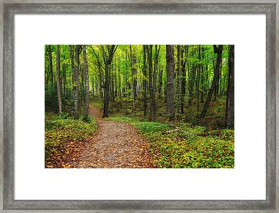 Trail To Miners Falls Framed Print by Rachel Cohen