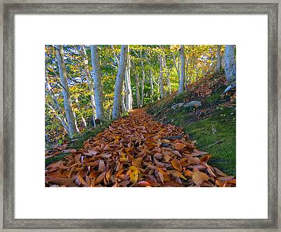Framed Print featuring the photograph Trailblazing by Dianne Cowen
