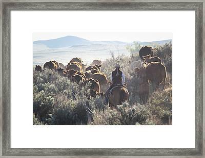 Trailing Cattle Framed Print