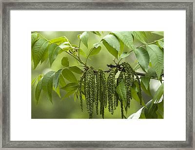 Trailing Green Draperies Framed Print