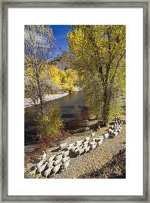 Trailing Of The Shep Framed Print
