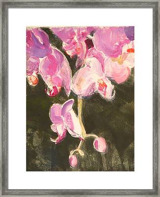 Trailing Phal Framed Print by Valerie Lynch
