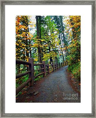 Trails In The Forrest Framed Print by Tina Wentworth