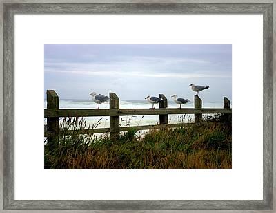 Trained Gulls Framed Print by John  Greaves
