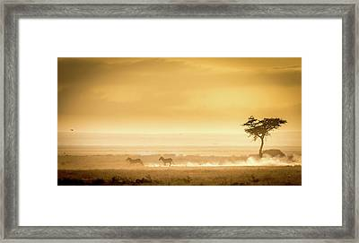 Training, Because The Lions Await. Framed Print