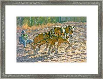 Training For The Pull  Framed Print