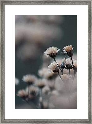 Framed Print featuring the photograph Tranquil by Bruce Patrick Smith