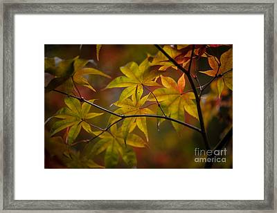 Tranquil Collage Framed Print by Mike Reid
