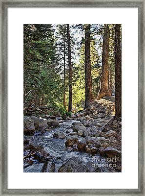 Tranquil Forest Framed Print by Peggy Hughes