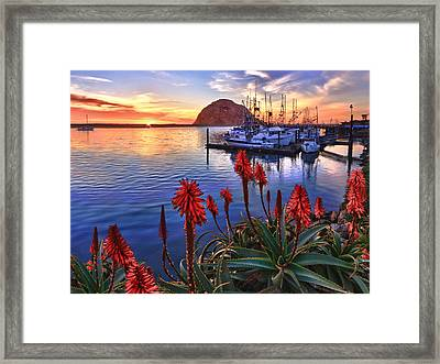 Tranquil Harbor Framed Print by Beth Sargent