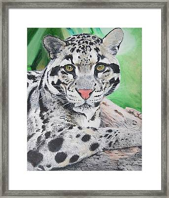 Tranquil Leopard Oil Painting On Canvas 8 X 10 Inches By Pigatopia Framed Print by Shannon Ivins