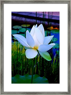 Tranquil Water Lily - Water Garden Lotus Framed Print