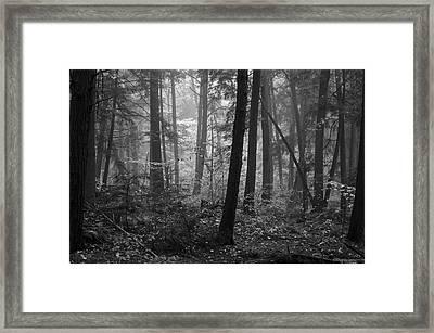 Tranquil Woods Framed Print by Eric Dewar