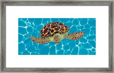 Caribbean Sea Turtle Framed Print by Daniel Jean-Baptiste