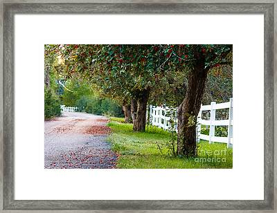Tranquility... Framed Print