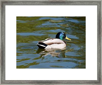 Tranquility Framed Print by Janina  Suuronen