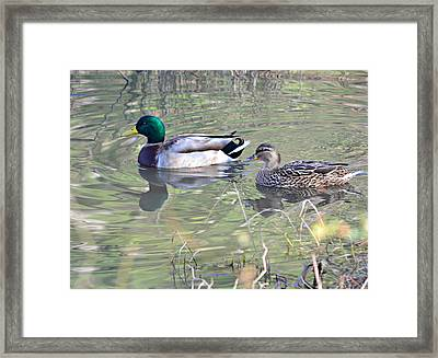 Tranquility Framed Print by Mary Zeman