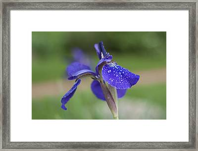Framed Print featuring the photograph Tranquility by Miguel Winterpacht
