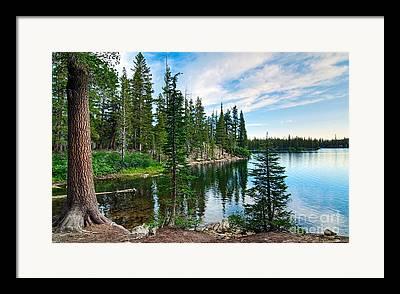 Pines Framed Prints