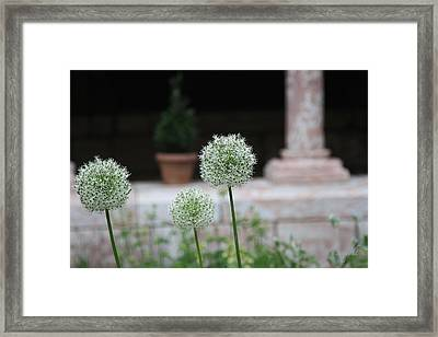 Tranquility Framed Print by Yvonne Wright