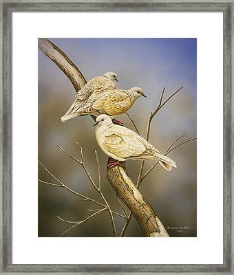 Tranquillity - Ring-necked Doves Framed Print