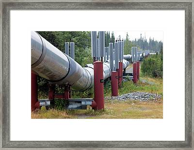 Trans-alaska Oil Pipeline Framed Print