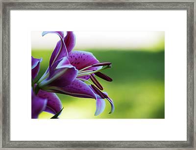 Transcendent Desire Framed Print