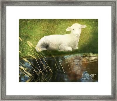 Transformation Lamb Or Lion Framed Print