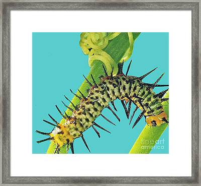 Transformation Takes Time Framed Print