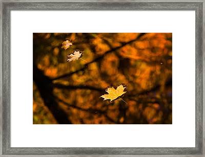 Transience Framed Print