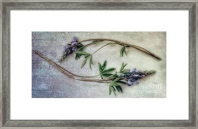 Transience Framed Print by Priska Wettstein
