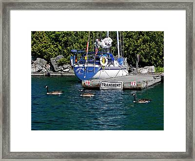 Transients Framed Print by Steve Harrington