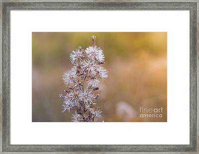 Transition 3 Framed Print by Barbara Shallue