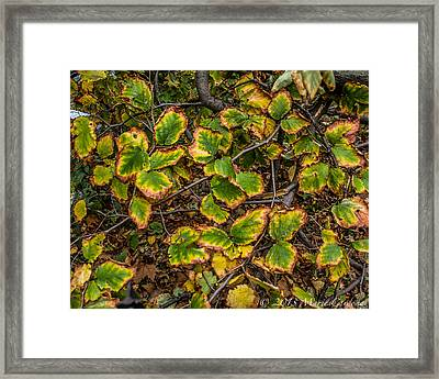 Transition Framed Print by Marie  Cardona