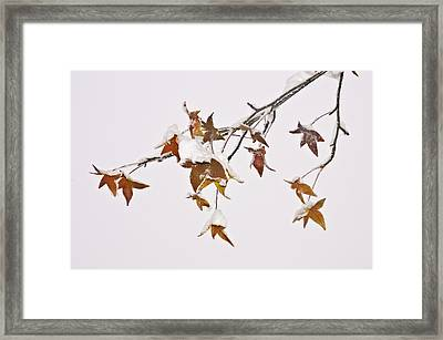 Framed Print featuring the photograph Transition by Sherri Meyer