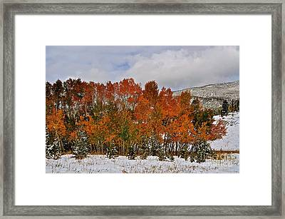 Transitions Framed Print by Susan Chesnut