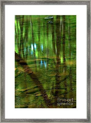 Translucent Forest Reflections Framed Print by Adam Jewell