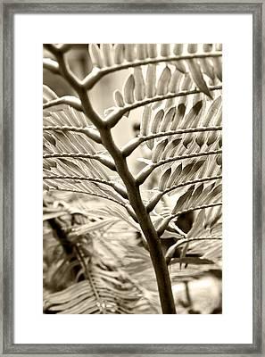 Translucidity Framed Print