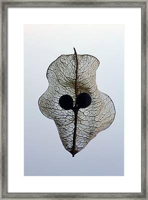 Transparence Framed Print by Richard Stephen